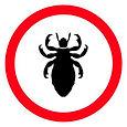 Lice-guide-.jpg