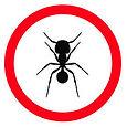 Ant-guide.jpg