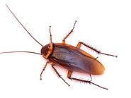 Pest control services.jpg