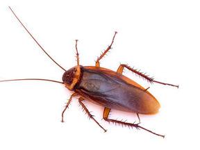 Blacktown Pest control services.jpg