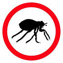 Fleas-Guide.jpg