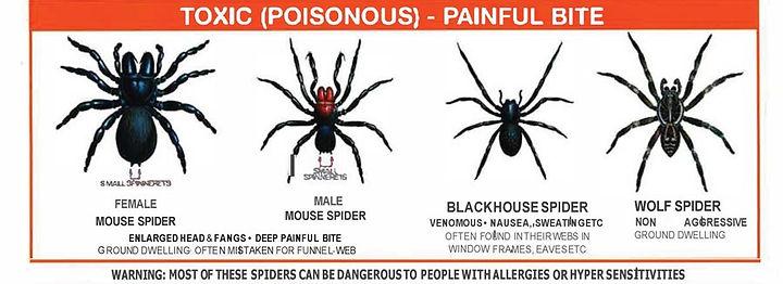 toxic spiders chart .jpg