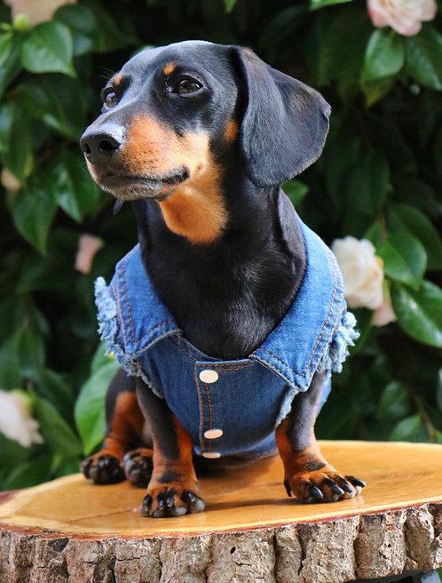 The Old Rocker Dog Denim shirt