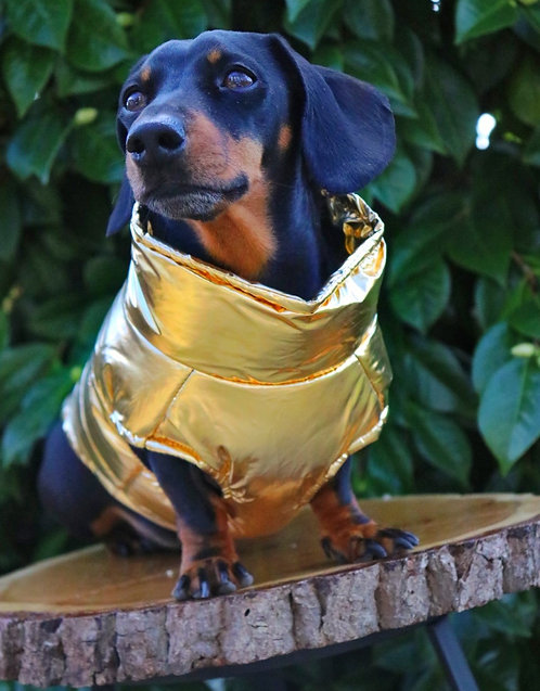 You Are Gold Dog Coat