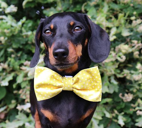 Yellow Polka Dog Bow Tie
