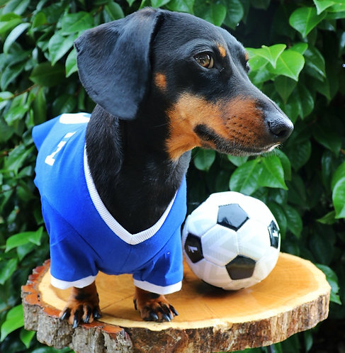 Blue Dog Football Shirt