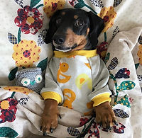 dog clothing_ dog pyjamas
