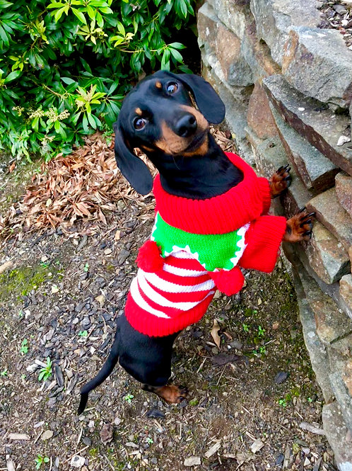 Elf Dog Christmas Jumper