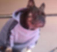 Dog clothing: dog hoodie