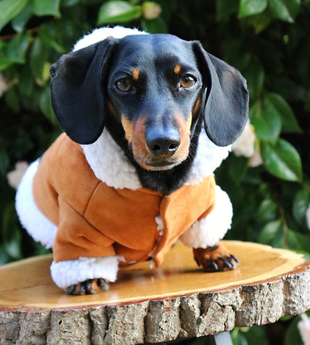 Puppuccino Ice Dog Jacket
