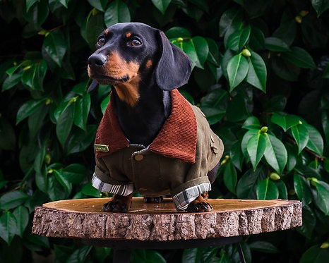 Country Bumpkin Dog Jacket