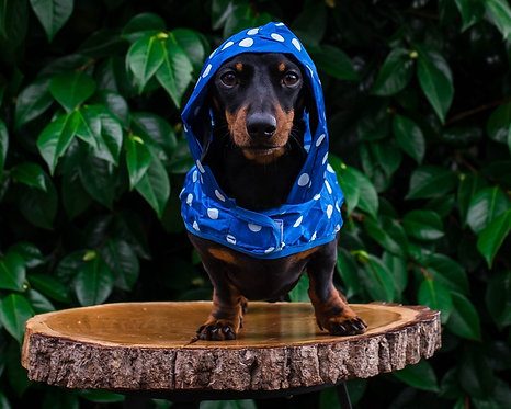 Dotty Dog Raincoat