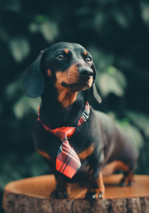 Tartan Dog Tie