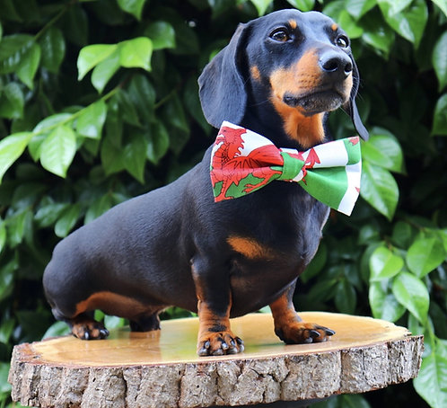 Welsh Dragon Dog Bow Tie