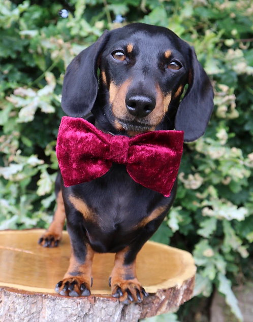 Red Velvet Cake Dog Bow Tie