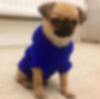 dog clothing: dog jumper