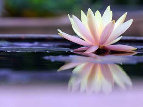 Free guided meditation