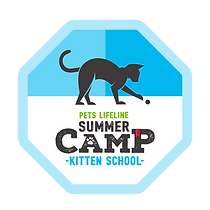 SummerCamp_KittenSchool.png