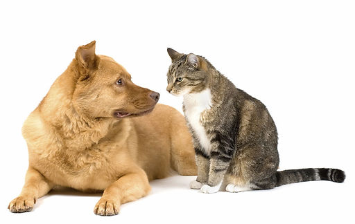 dog and cat pic.jpg