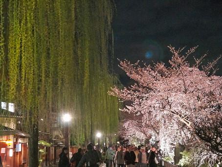 기온 시라카와 祇園白川