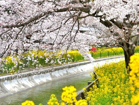 琵琶湖疏水(山科)