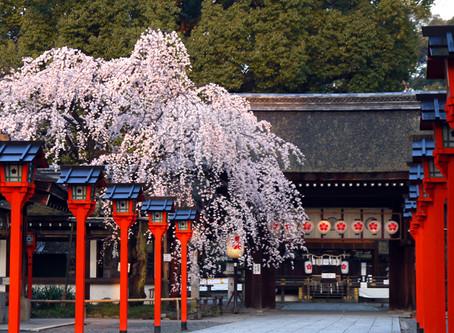 平野神社 4/10「桜花祭」、3/26~4/17「桜コンサート」