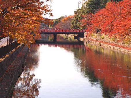 岡崎界隈(平安神宮・京都市動物園)