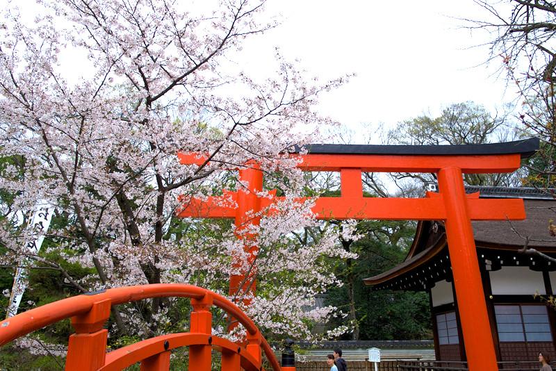 下鴨神社の桜