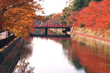 京都岡崎の紅葉