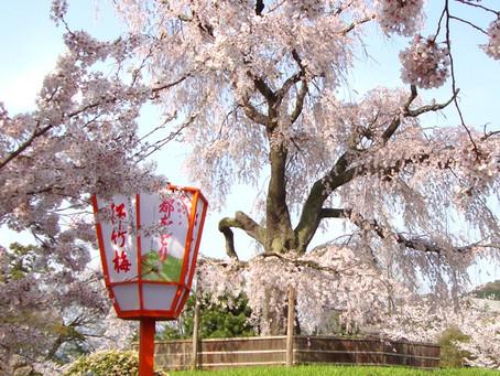 마루야마공원 円山公園