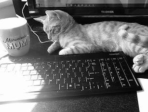 mornings cat.jpg