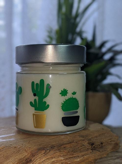 Chandelle Cactus Kodo