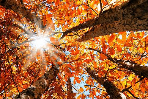 Chandelle autre Fragrance d'automne