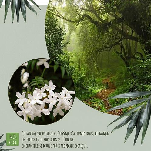 Chandelle kodo Forêt Pluviale