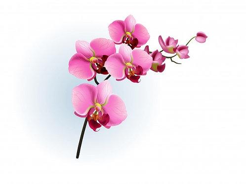 Chandelle Litche & Orchidé Rose