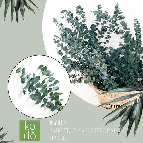 Chandelle kodo Eucalyptus