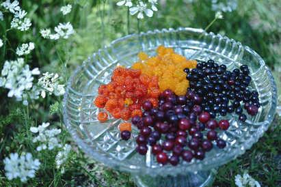 収穫果実いろいろ