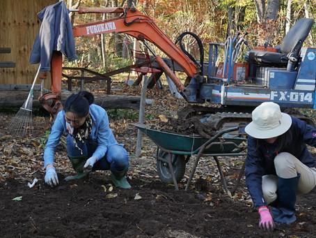 11月のガーデンボランティア作業報告