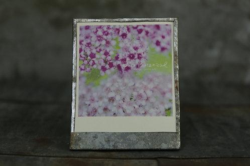 オリジナルカードブリキフレーム フォトカード1枚付き 「シモツケ」