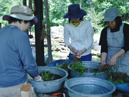 6月ガーデンボランティアDAYのご報告
