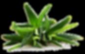 Produits Forever Aloe Vera Bordeaux