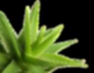 Propolis crème Forever Aloe Vera Bordeaux