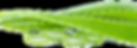 Pulpe Aloe Vera Bordeaux