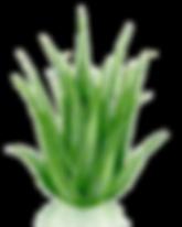 Aloe Vera Bordeaux Distributeur Forever