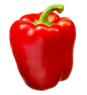 supplier Bell Pepper Red Yellow Green IQF Fire Roasted