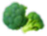 supplier Broccoli Riced IQF