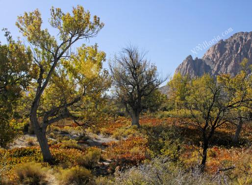 An Autumn Saturday Morning at Spring Mountain Ranch