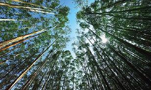 Agroforestry-in-Laos.jpg
