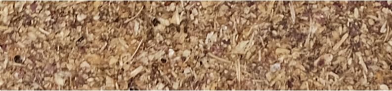Fasulye Kabuğu