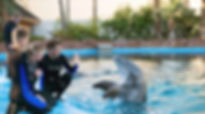 mirage-secret-garden-dolphin-habitat-tra